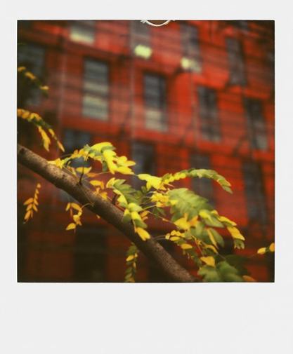 polaroid-photo-color