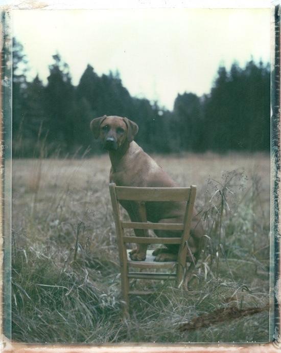Polaroids by Bastian Claus