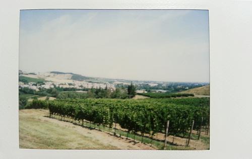 Предаппио, виноградники